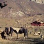Un weekend nella natura nel cuore dell'Abruzzo