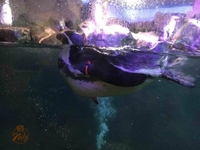 pinguino-acquariodicattolica